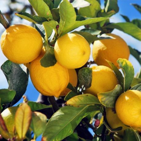 Limoni 10 kg