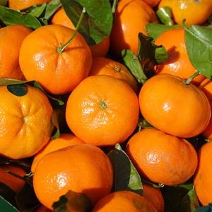 Clementine  7 kg